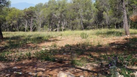 Plot for sale in Sierra Blanca – R2861339