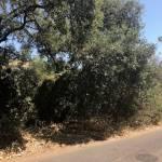 Plot for sale in Elviria – R3216421